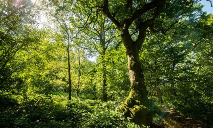 The Wildlife Trust said HS2 will damage the ecosystems that could solve the climate emergency.